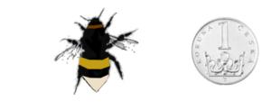 Čmelák zemní - Bombus terrestris