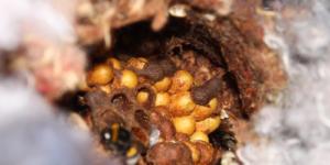 Hnízdo čmeláků