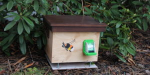 Čmelín palisandr - zelená